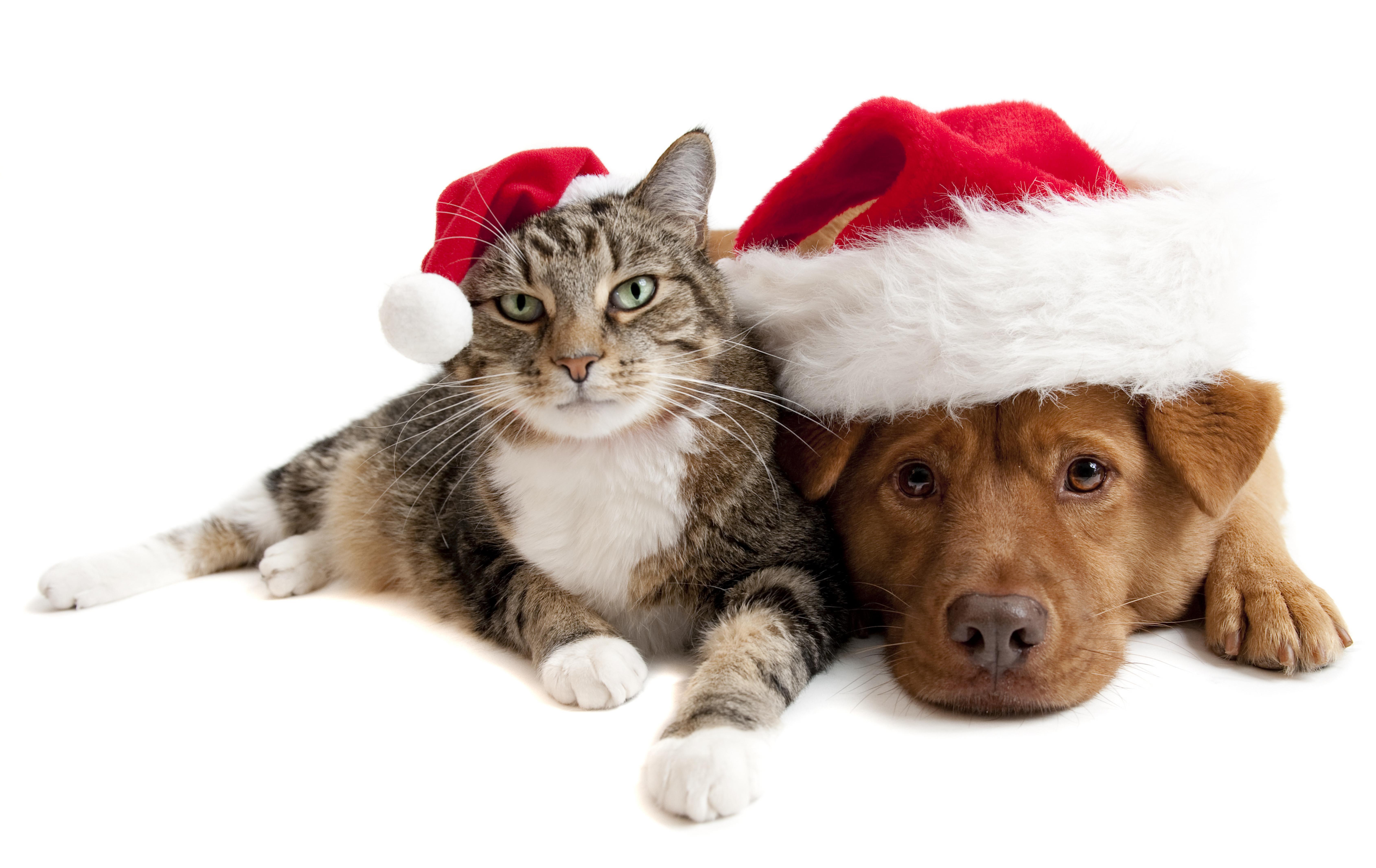 Christmas Animals Dog Cat